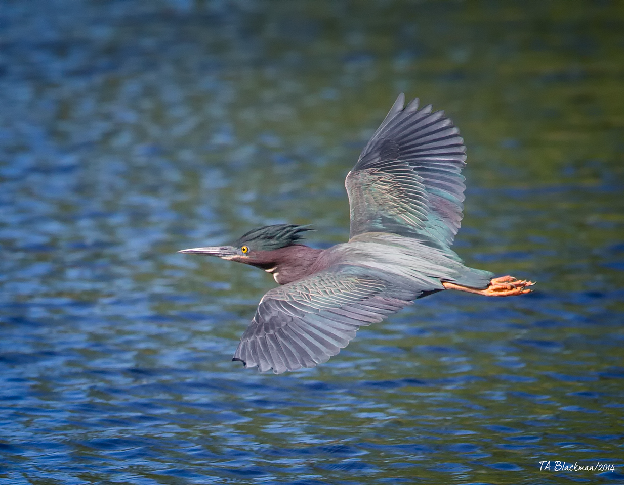 Heron_Green TAB141DX-07381-Edit