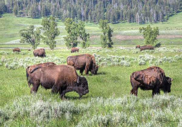 Bison TAB155DIII-22981_80_79HDR